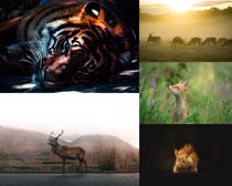 森林動物寫真拍攝高清圖片