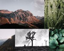山川植物风景拍摄高清图片