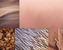 枫叶沙漠风光摄影高清图片