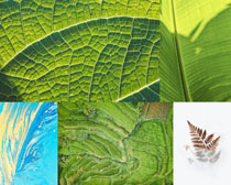 綠色植物葉子攝影高清圖片