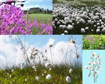 漂亮的花朵草丛摄影高清图片