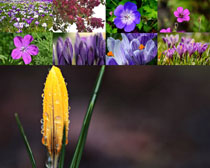 春天漂亮的花朵摄影高清图片