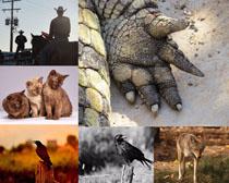 貓咪兒狼狗小鳥攝影高清圖片