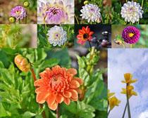盛開的美麗鮮花攝影高清圖片