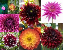 漂亮的開放花朵攝影高清圖片