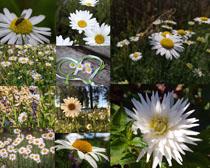 野外盛開的鮮花攝影高清圖片