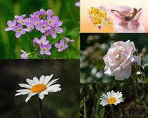 春天美麗自然花朵攝影高清圖片