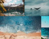 藍色大海沙灘風景拍攝高清圖片