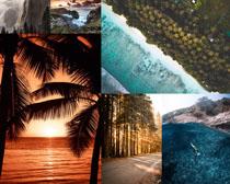 大海椰樹森林景色攝影高清圖片