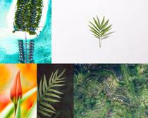 樹葉生命植物攝影高清圖片