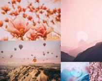花朵山峰日出景觀攝影高清圖片