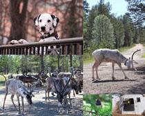 鹿狗牛鳥動物攝影高清圖片
