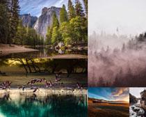 生態樹林小鳥風景攝影高清圖片