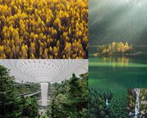 美麗的樹林景色風光攝影高清圖片