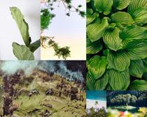 綠葉森林風光攝影高清圖片