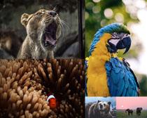 鸚鵡大象狗熊動物攝影高清圖片