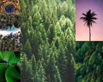 绿色树木景色摄影高清图片