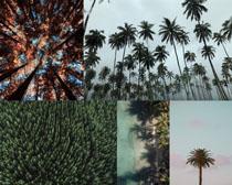 椰树树木风景摄影高清图片