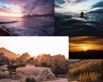 大海石头森林风景摄影高清图片