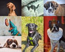 可愛狗與貓咪動物拍攝高清圖片