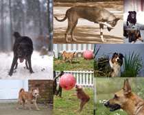 運動的狗狗攝影高清圖片