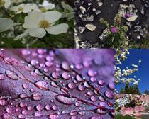 春天花朵露水攝影高清圖片