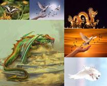 和平鴿蝴蝶攝影高清圖片
