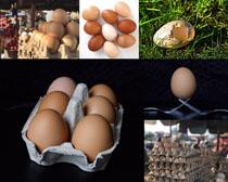 新鮮雞蛋拍攝高清圖片