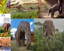 動物園大象拍攝高清圖片