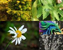 绿色植物花朵叶摄影高清图片