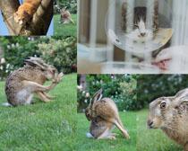 草地边可爱的兔子摄影高清图片