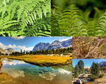 綠色樹木葉子植物攝影高清圖片