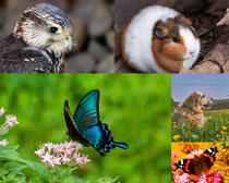 兔子狗蝴蝶動物攝影高清圖片