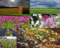 美丽花草风景拍摄高清图片