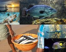 海底魚生物攝影高清圖片