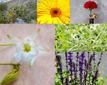 美麗盛開的花朵拍攝高清圖片