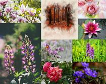 春天美麗的花朵寫真拍攝高清圖片