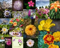 漂亮的各種花朵拍攝高清圖片