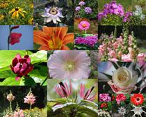 園林美麗的花朵拍攝高清圖片