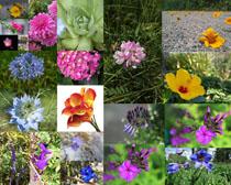 春天美麗的各式花朵拍攝高清圖片