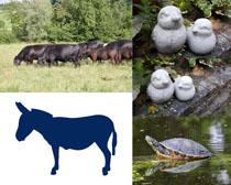 牛烏龜動物拍攝高清圖片
