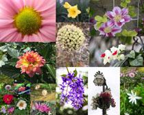 春天美麗花朵拍攝高清圖片