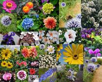 花園里的花朵寫真拍攝高清圖片
