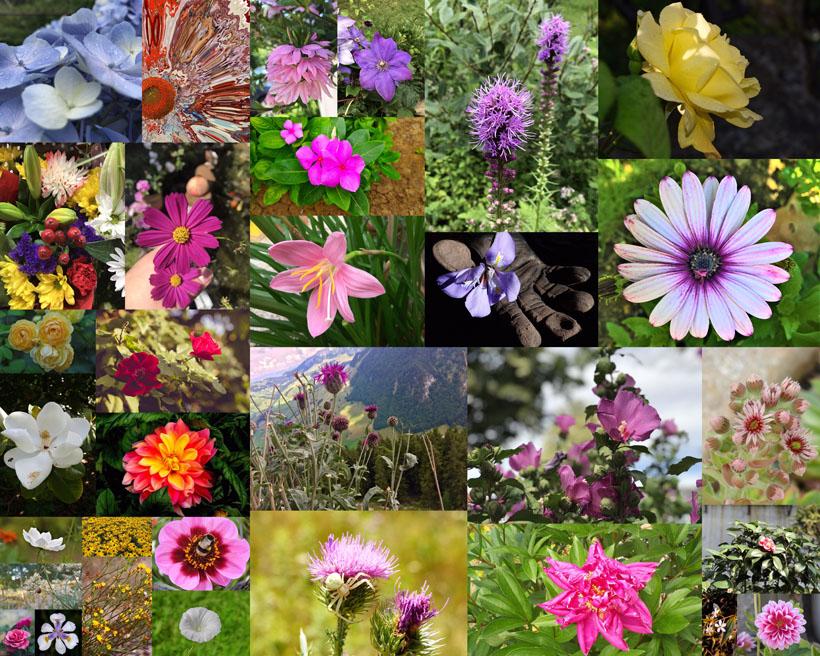 春天種類花朵拍攝高清圖片