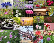 公園美麗花叢寫真拍攝高清圖片