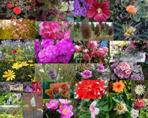 春天里的花朵拍攝高清圖片