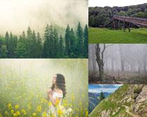 樹木花朵美景拍攝高清圖片