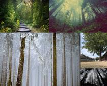 美麗的自然小樹林攝影高清圖片