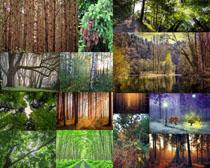 森林樹木植物風景拍攝高清圖片