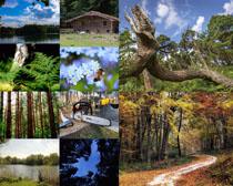 森林大樹攝影高清圖片
